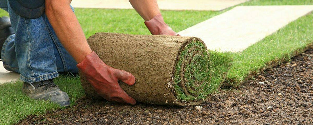 ce fel de tratament îmbină iarba)
